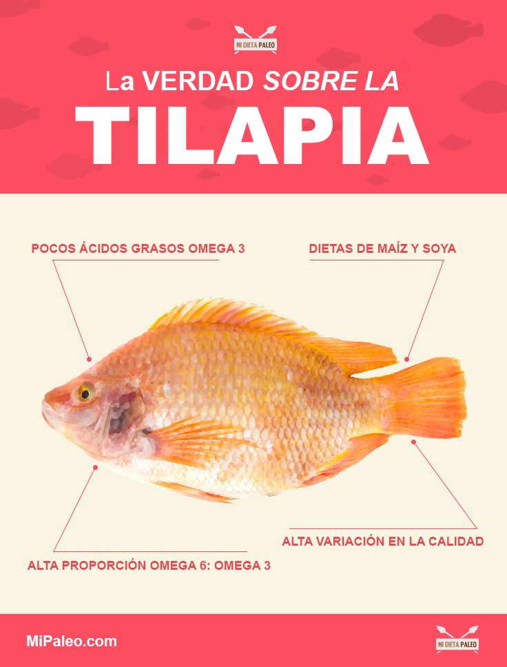 The-Truth-About-Tilapia-infographic