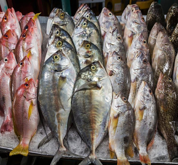 fish-seafood-in-market-e1463630276963