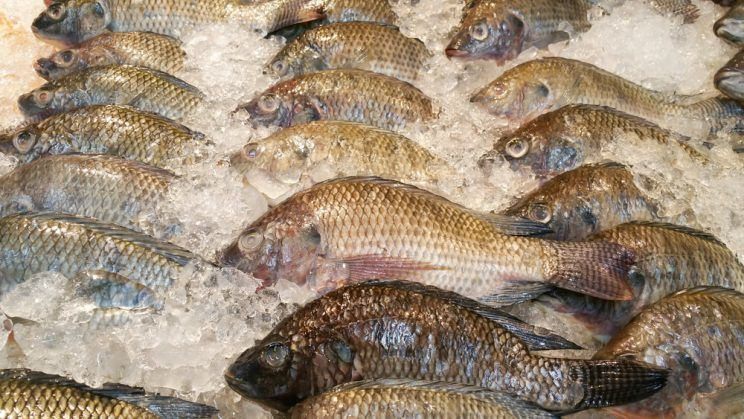 fresh-fish-on-ice-at-market-e1463630215955